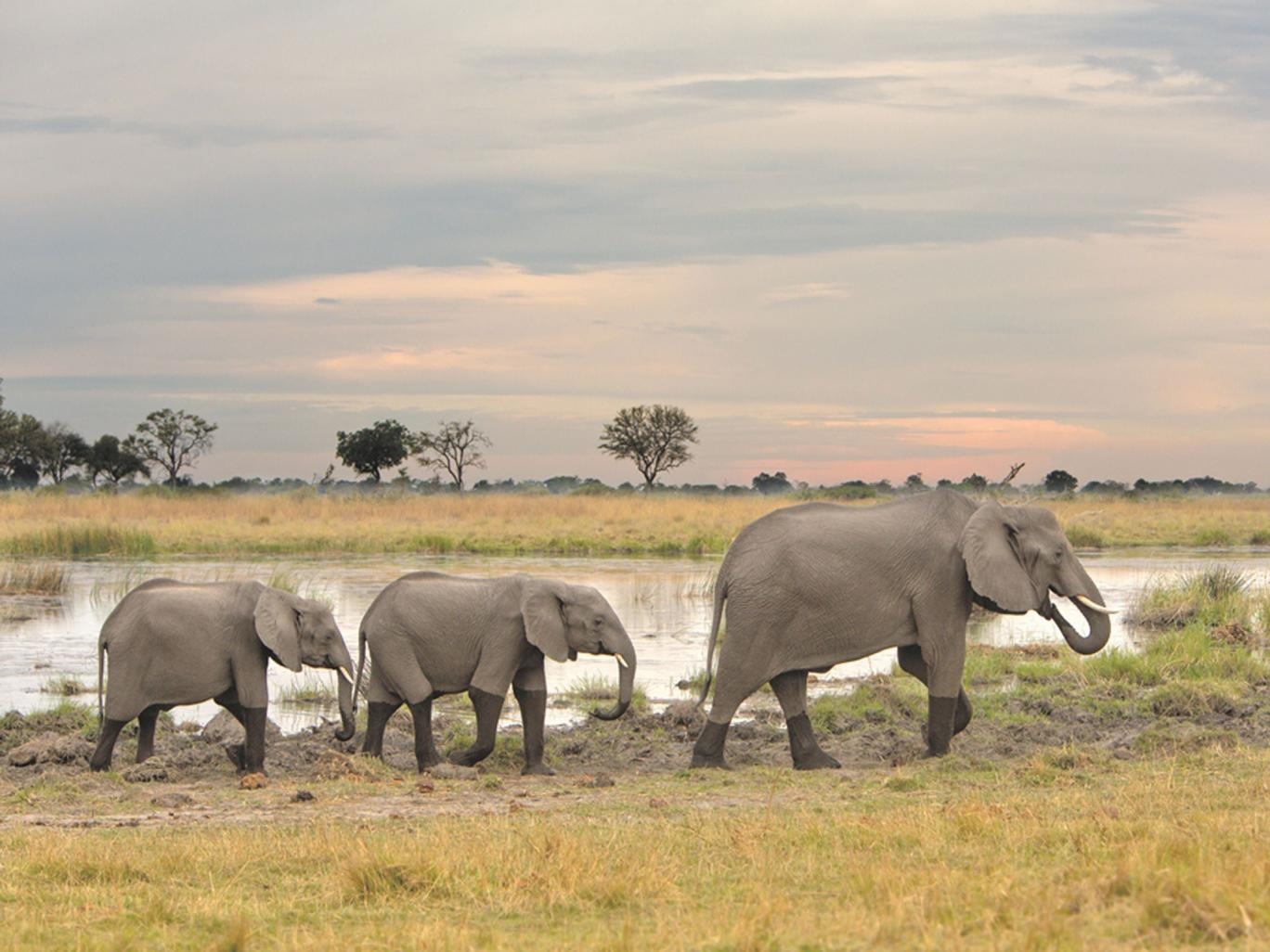 Botswana tops Lonely Planet's list of best places to visit in 2016